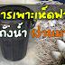 การเพาะเห็ดฟาง ในถังน้ำ (ง่ายมาก)