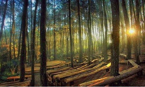 Outbound Di Hutan Pinus Mangunan Dan Puncak Becici Outbound Jogja Paket Outbound Tempat Outbound