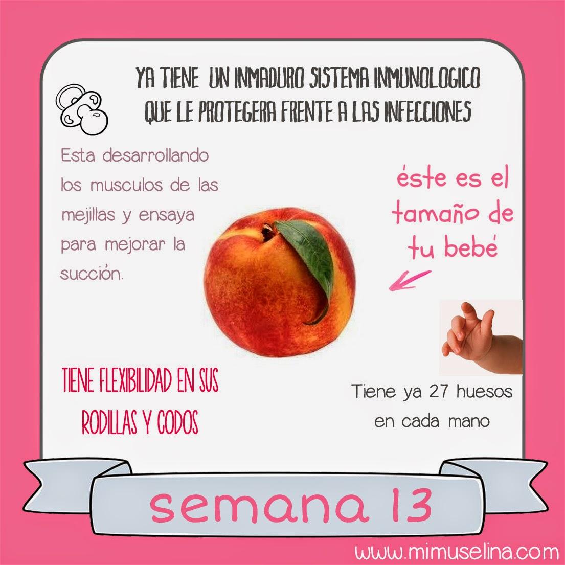imagenes de un bebe de 13 semanas en el vientre