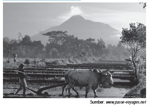 Contoh Kegiatan Pertanian Yang Dikembangkan Di Indonesia
