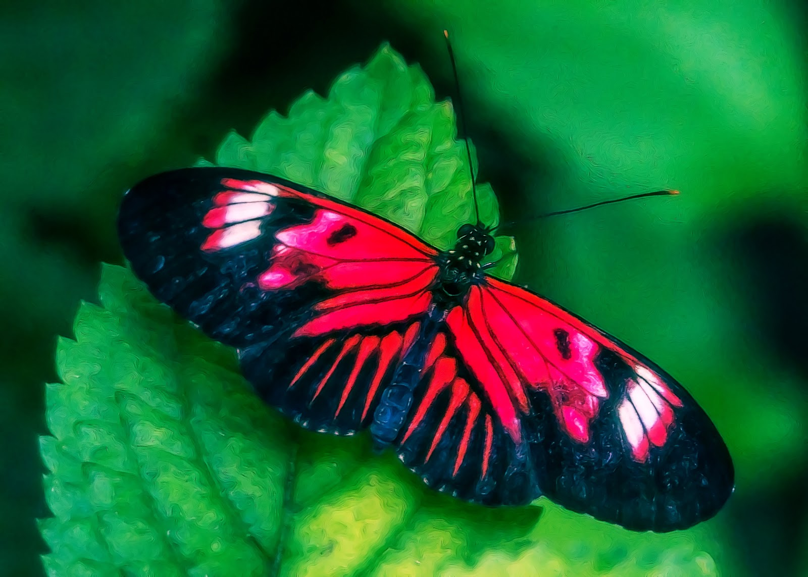 Beautiful Pictures Of Flowers And Butterflies Birds Lynn Wiezycki Photography Butterfly World Butterflies