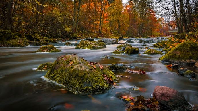Wallpaper: River Nature Autumn Wood