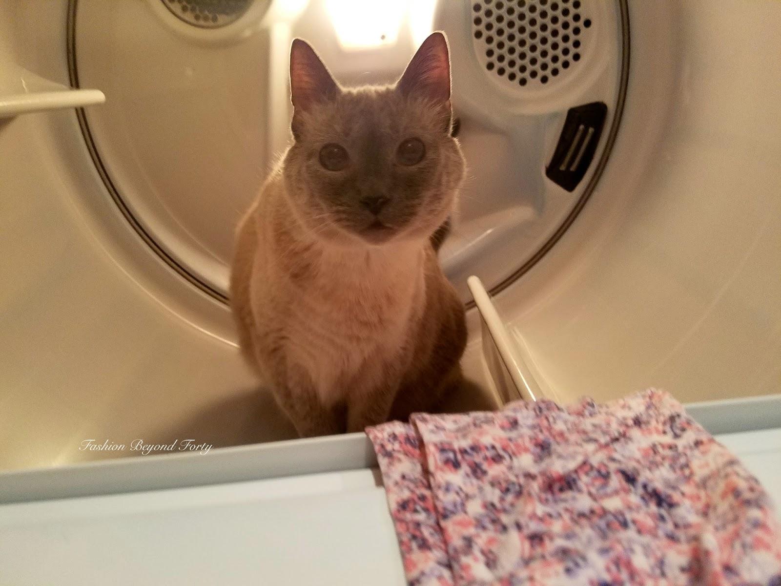 Tibet the Cat In Dryer