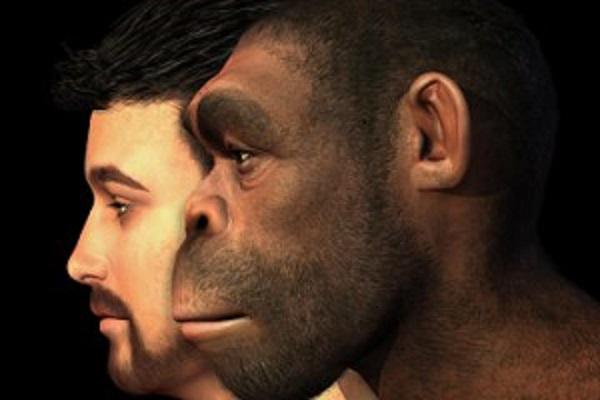 حقيقة نظرية التطور