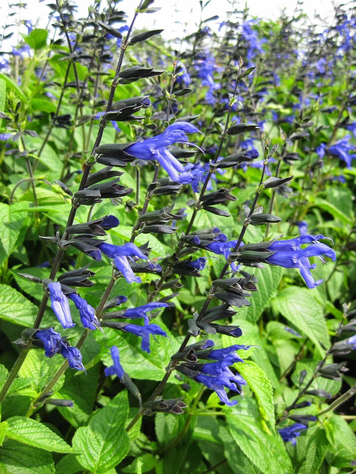20 Essential Flowering Perennials For Your Garden The