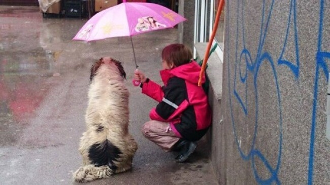 16 Pictures Of Children Restored Our Faith In Humanity - Thumbs up for this little boy who made space for the stray dog under his tiny umbrella.