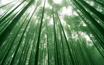 Bamboo investing