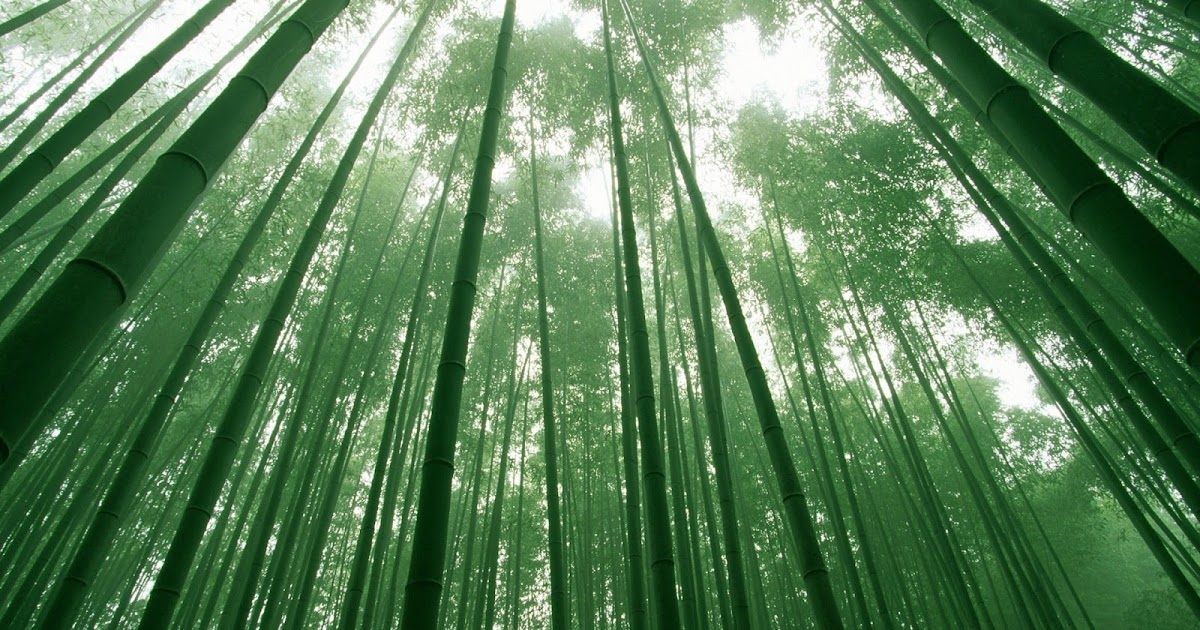 bamboo investing the rise of phoenix in stock markets