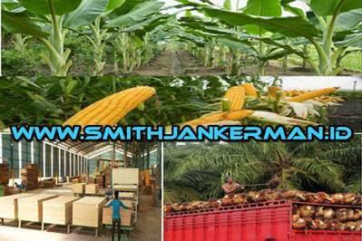 Lowongan Perusahaan Perkebunan Kelapa Sawit,Pisang,Jagung Dan Pabrik Plywood Di Riau Maret 2018