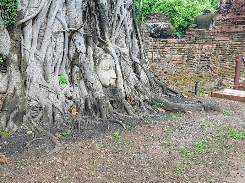 瑪哈泰寺著名的樹中佛