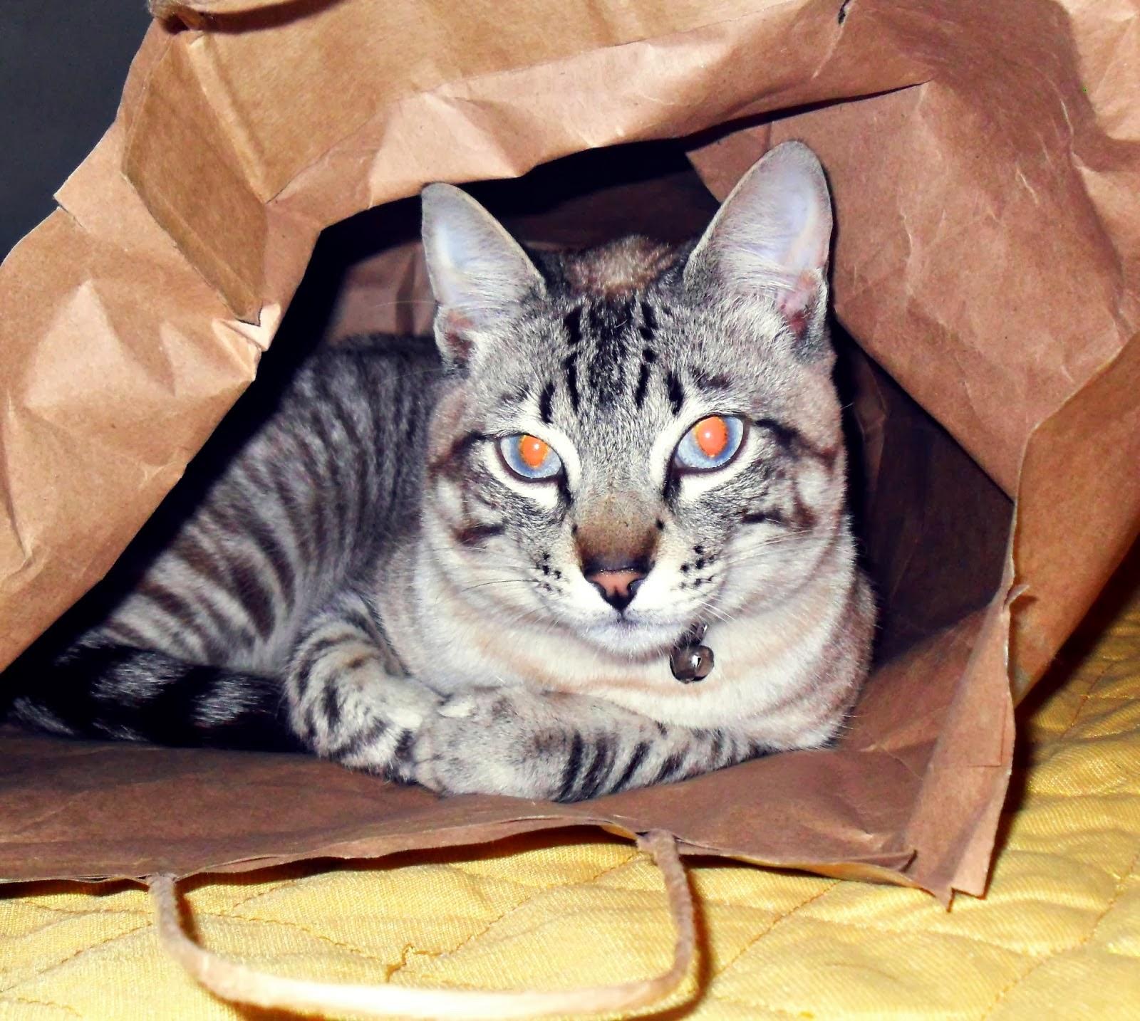 Gatos | Cats
