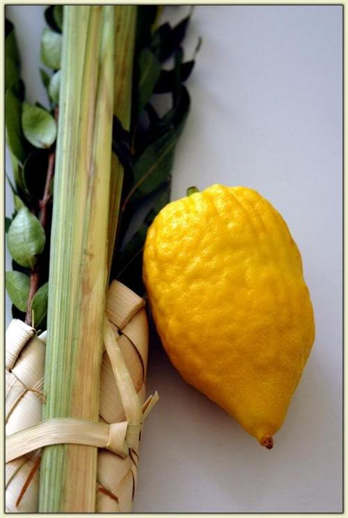 Finding Out Sukkot Lulav Symbolism