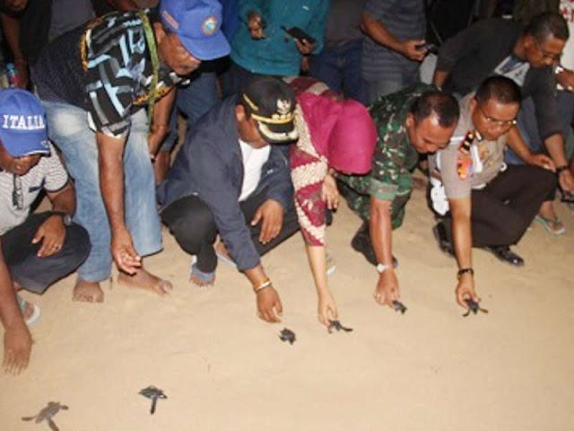 Abdul Faris Umlati Lepas Puluhan Ekor Tukik ke Laut Raja Ampat