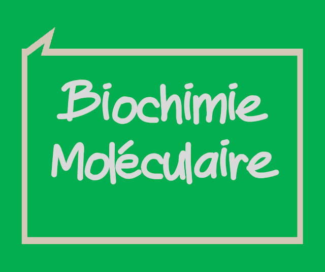 TD Corrigé Biologie Moléculaire