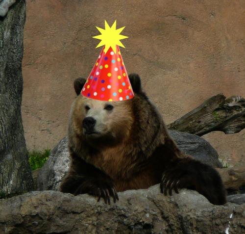 I Am Not An Anteater Happy Birthday Kachina And Kiona