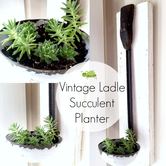 Vintage Ladle Succulent Planter and How to Plant Succulents www.homeroad.net