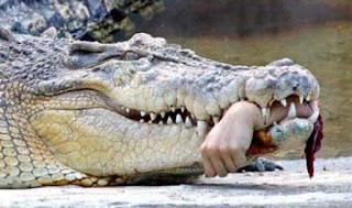 Người đàn ông Philippines bị cá sấu ăn thịt trong bão Tembin www.banhxepu.net