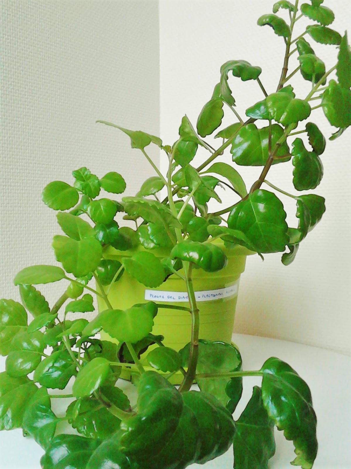 La ventana de javiruli plantas de interior 33 planta - Plantas del interior ...