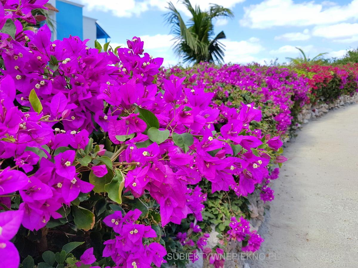 Kuba - kwiaty i palmy