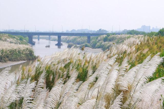 台南後壁河岸邊的雪白秘境