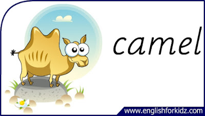 camel flashcard