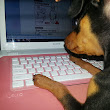 A dog with a blog...