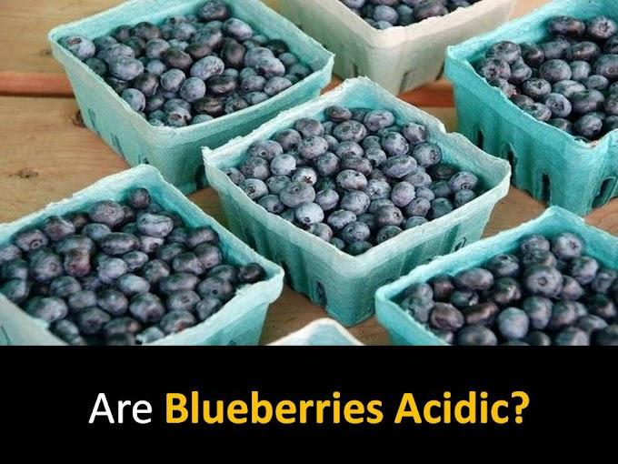Are Blueberries Acidic?