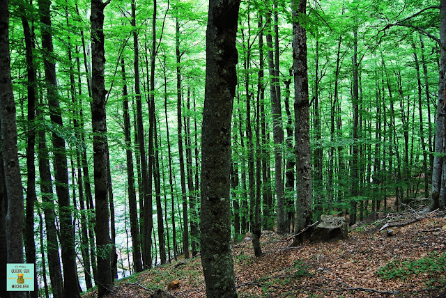 Bosque de hayas, Parque Nacional de Ordesa