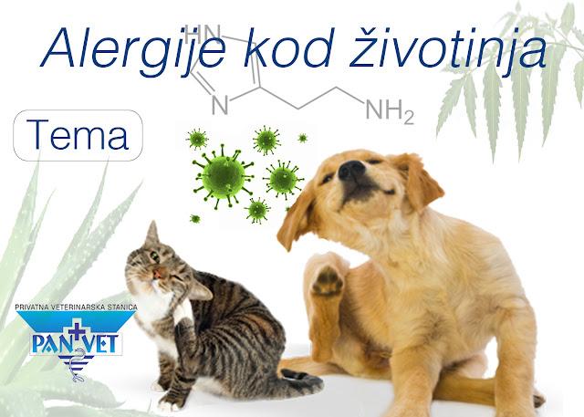Alergije kod životinja - kućnih ljubimaca, Panvet veterinarska stanica