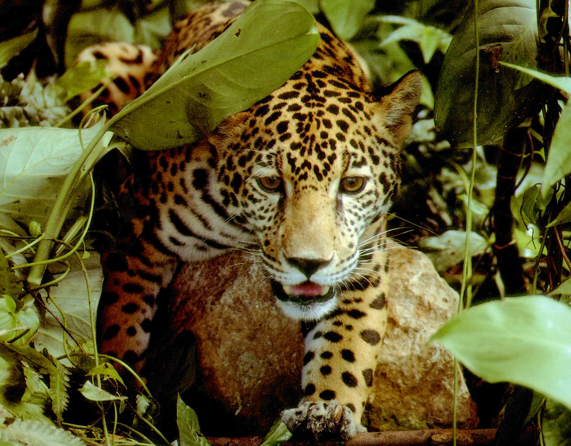 rainforest animal wallpaper pictures - photo #42