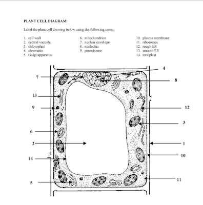 Plant_Cell_JKAnswers