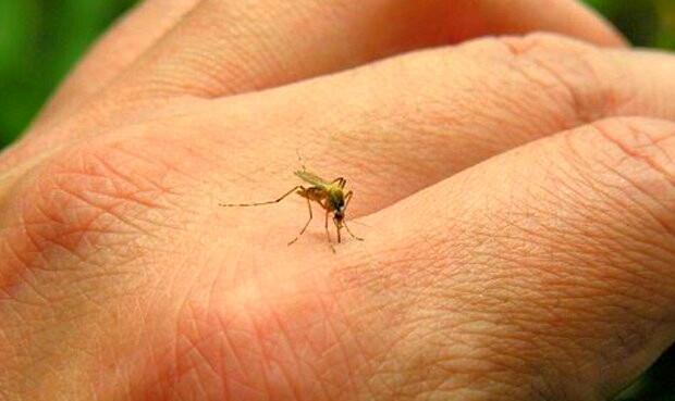 """No se trata de la """"dulzura"""" de la sangre. La razón por la que los mosquitos pican más a unas personas que a otras"""