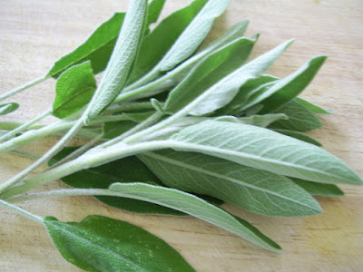 manfaat sage, dimana beli teh sage, nama lain daun sage, gambar daun sage, daun sage beli dimana, jual daun sage kering, pengganti daun sage, teh sage untuk asi, bentuk daun sage,