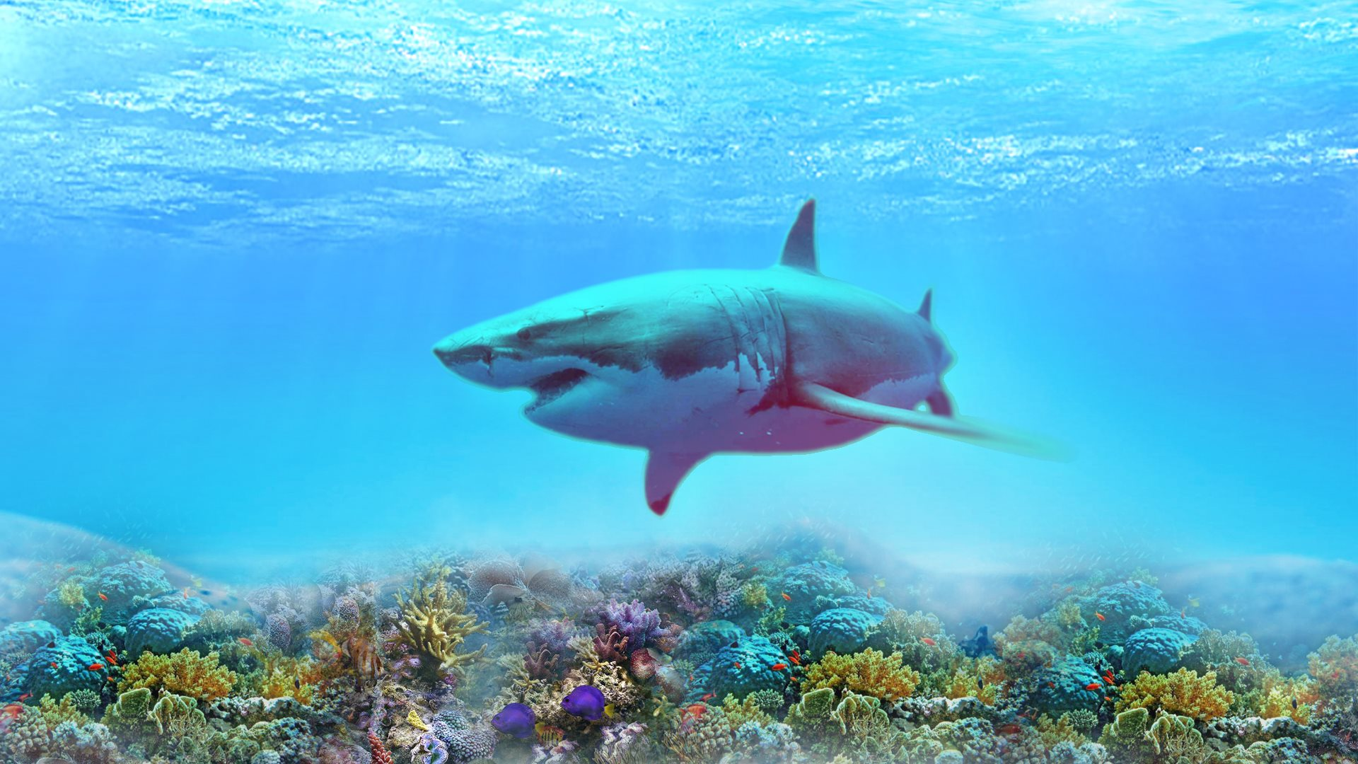 the great white shark wallpapers in hd 4k and wide sizes