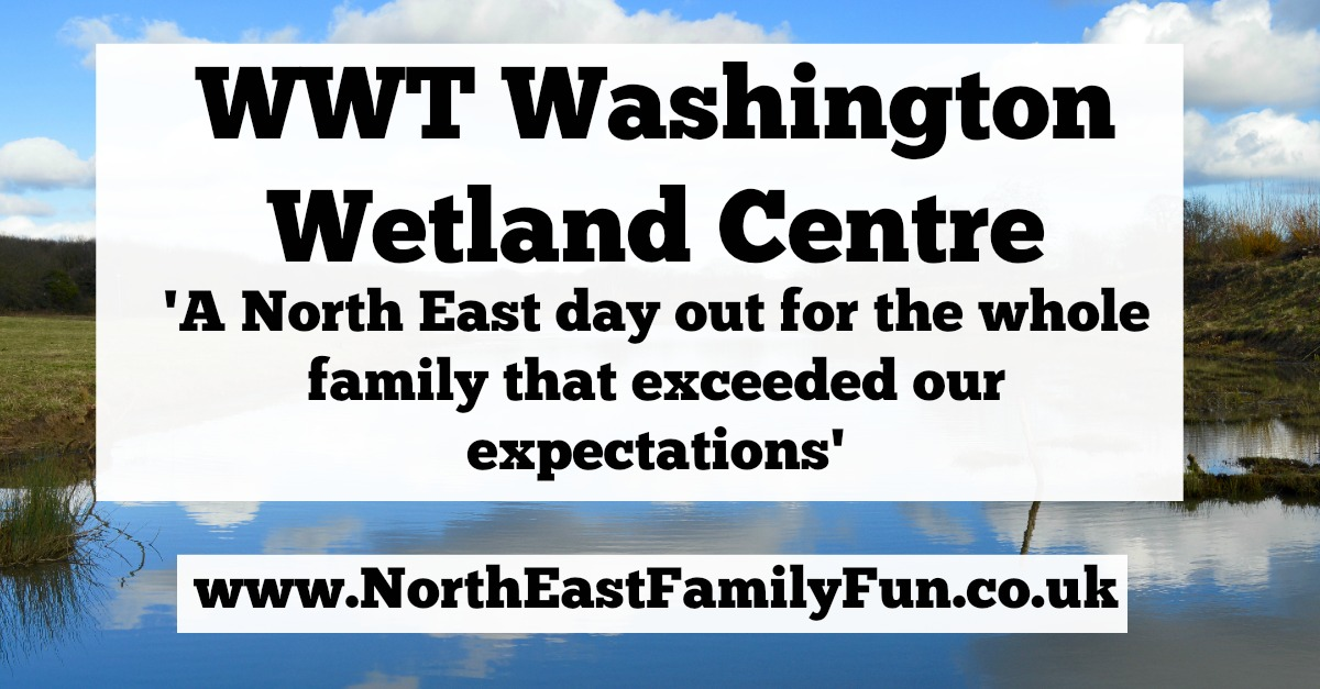 WWT Washington Wetland Centre | An Accessible North East Day Out for the Whole Family