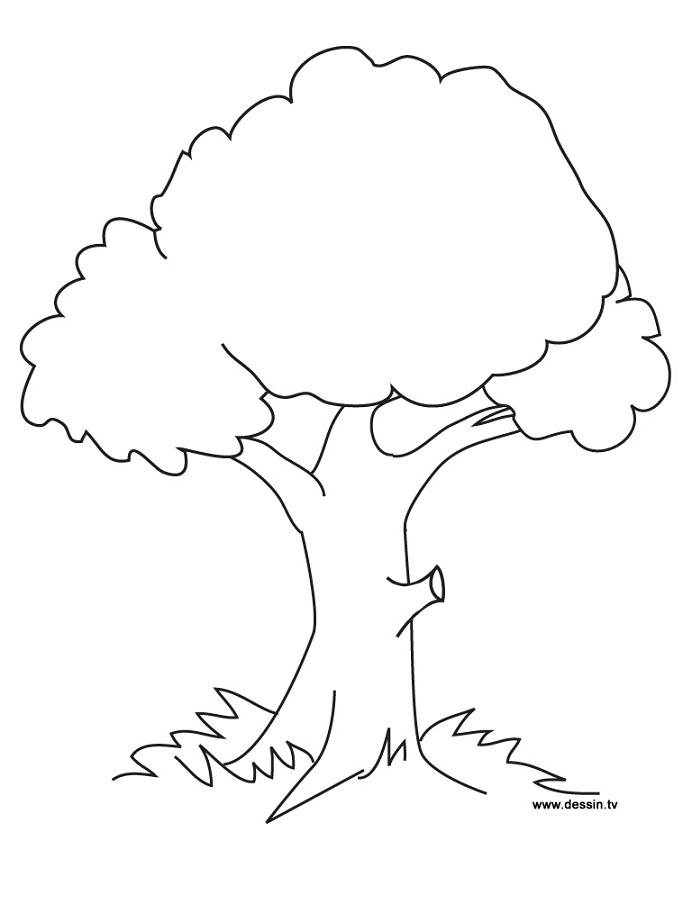 Contoh Gambar Mewarnai Gambar Pohon Beringin Kataucap