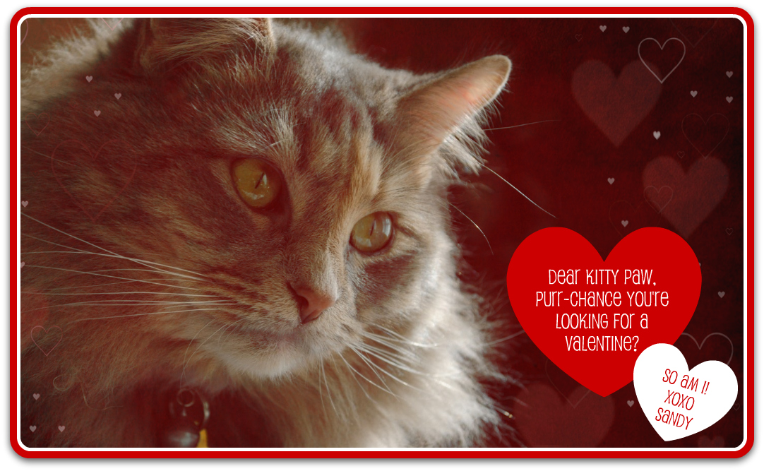 L To The Third A Love Letter To Kitty Paw And A Valentine