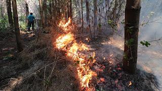 Onemi informa 36 focos activos y ocho fallecidos por incendios forestales en el sur