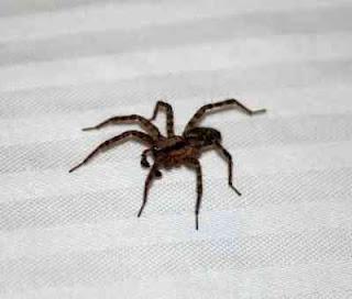 Penyebab banyak laba laba dirumah dan cara mengatasinya