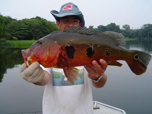 Selebere Peacock Bass Dan Jenis Jenisnya
