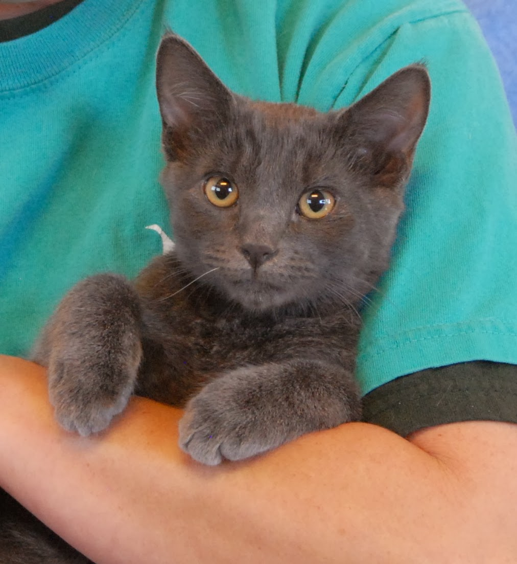 non cat people meet kittens for adoption