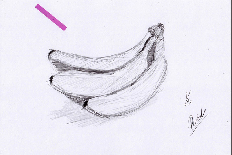 L2Draw: Quick Sketches Of Random Stuff Like Insects And Fruit