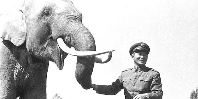 O elefante Lin Wang