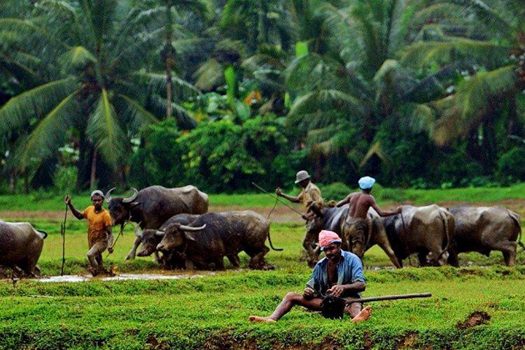 Sri Lanka halkı cana yakındır, fakat saat gece yarısı olunca Tamil tehlikeli olur.