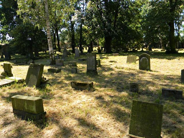 Kożuchów, stary cmentarz, brzoza