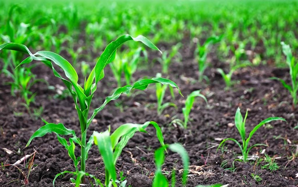 美國矽谷最新創投趨勢:買塊田,跟農夫一起發動科技革命