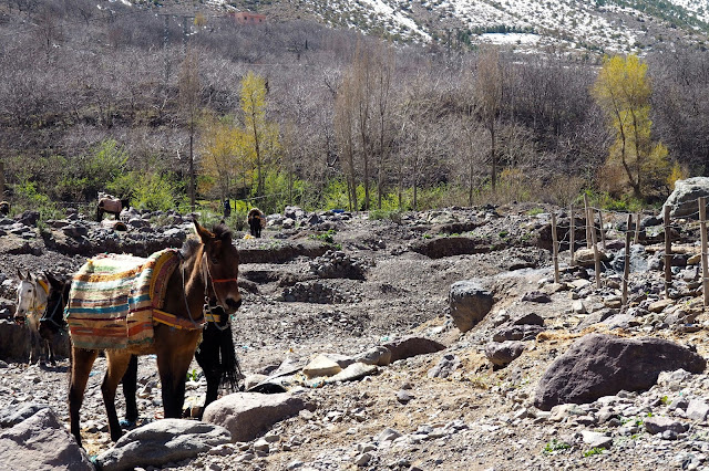 donkey in atlas mountains Marrakech Photo Diary