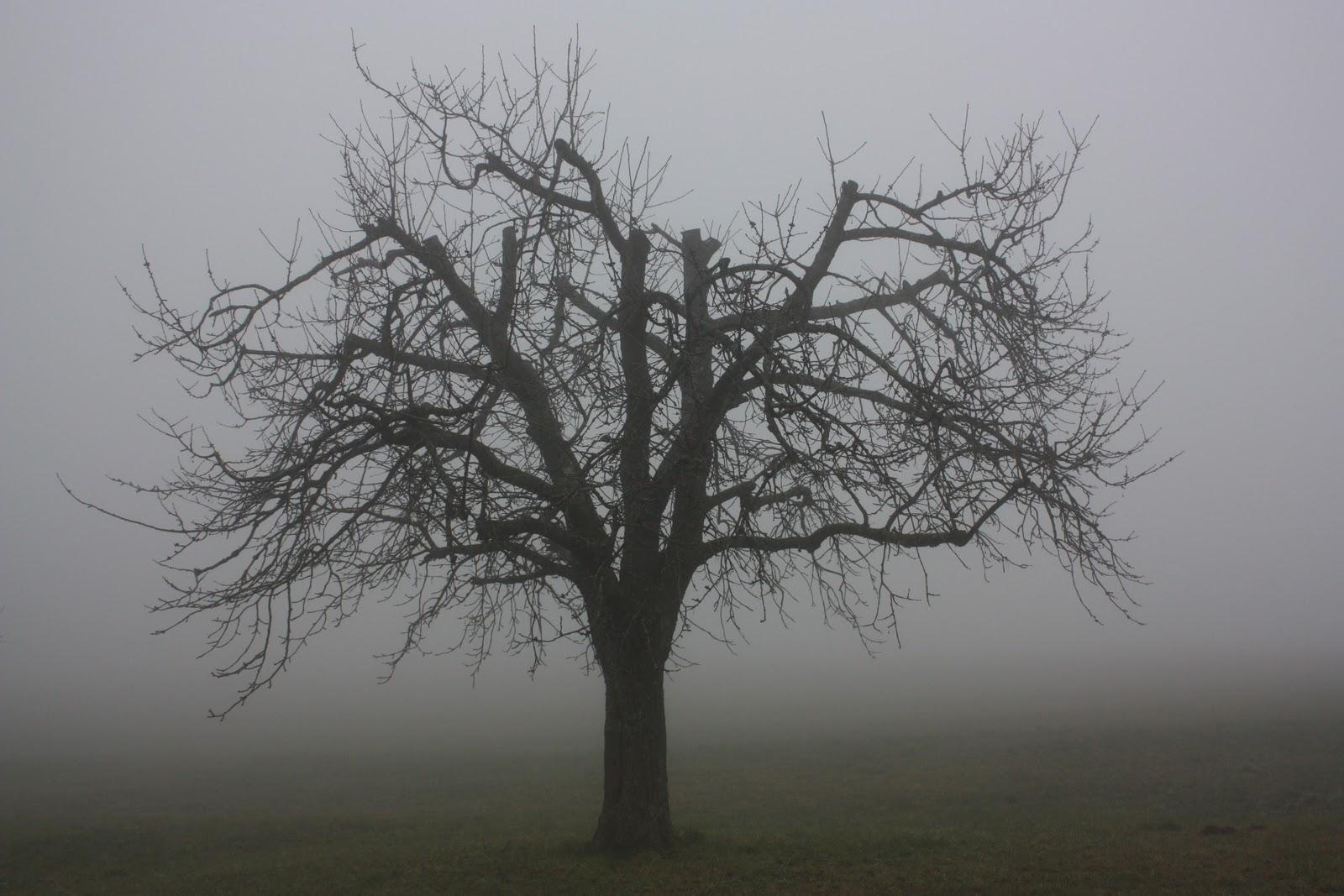 Mesmo Que Eu Ande Pelo Vale Da Sombra Da Morte Salmo: Le Petit Monde De Kaline: Day 13