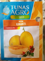 tanaman melon, cara menanam melon, buah melon, jual benih melon, lmga agro
