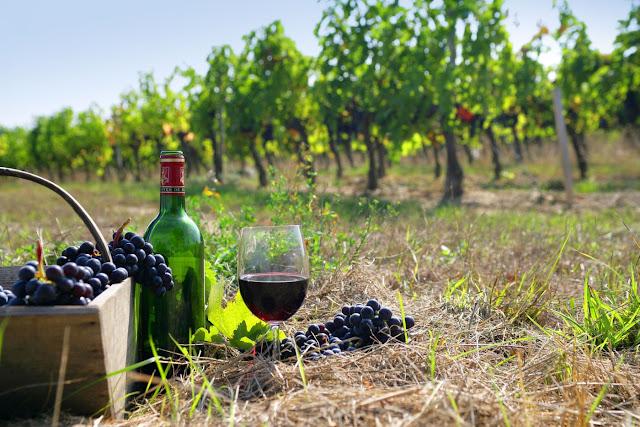 Λίγο και καλό αλλά...ακριβό το ελληνικό κρασί εσοδείας 2017